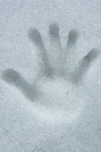 Feb-24-hand-in-the-snow